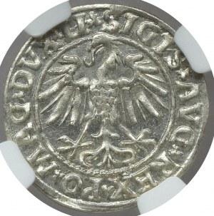 Zygmunt II August, Półgrosz 1547 Wilno