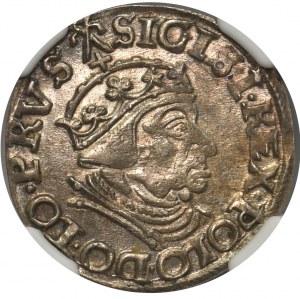 Zygmunt I Stary, Trojak Gdańsk 1539 - NGC AU58