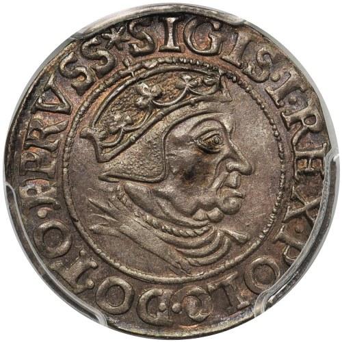Zygmunt I Stary, Grosz Gdańsk 1538 - PCGS MS62