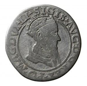 czworak, Zugmunt II August (1545-1572), 1569