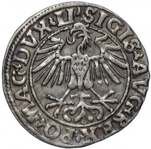 Zygmunt II August, Półgrosz 1550 Wilno - LI/LITVA