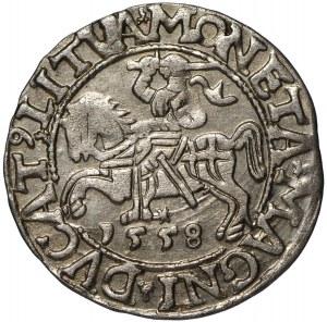 Zygmunt II August, Półgrosz 1558 Wilno - LI/LITVA