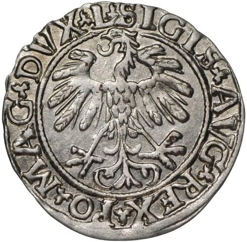 Zygmunt II August, Półgrosz 1559 Wilno - L/LITVA
