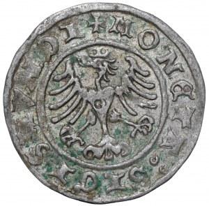 Zygmunt I Stary, Półgrosz 1508 Kraków