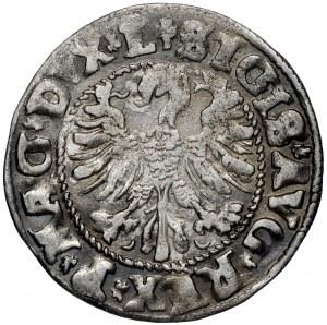 Zygmunt II August, Półgrosz 1546 Wilno - L/LITV Pogoń typ I
