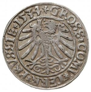 grosz 1534, Toruń, PN.13-Dut.105, bardzo ładny