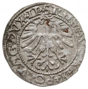 półgrosz 1562, Wilno, rzadsza odmiana z herbem Topór na...