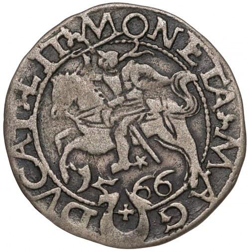 Zygmunt II August, Półgrosz Tykocin 1566 - Jastrzębiec