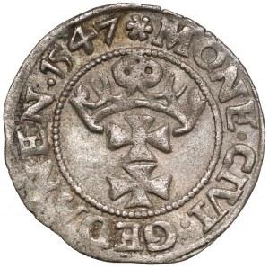 Zygmunt I Stary, Szeląg Gdańsk 1547