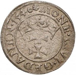 Zygmunt I Stary, Szeląg Gdańsk 1546 - POLONI