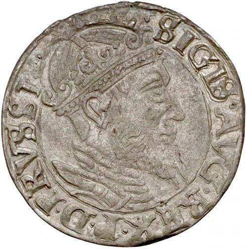Zygmunt II August, Grosz Gdańsk 1556 - rozdwojona broda - rzadki