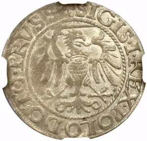 Zygmunt I Stary, Grosz 1540 Elbląg - NGC MS62