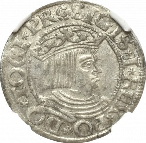Zygmunt I Stary, Grosz 1534 Gdańsk - NGC AU58