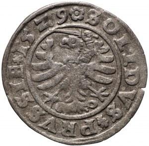 Zygmunt I Stary, szeląg 1529, Toruń