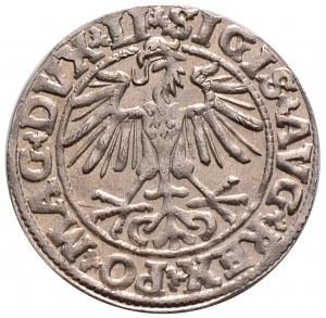 Zygmunt II August, półgrosz 1550, Wilno