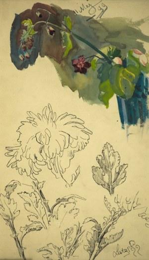 Stanisław Kamocki (1875-1944), Studia gałązki z polnymi kwiatami, chryzantemy, V.XI 1899