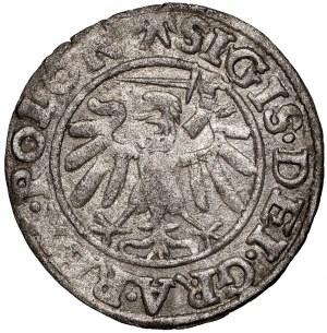 Zygmunt I Stary, Szeląg 1538 Gdańsk - POLON