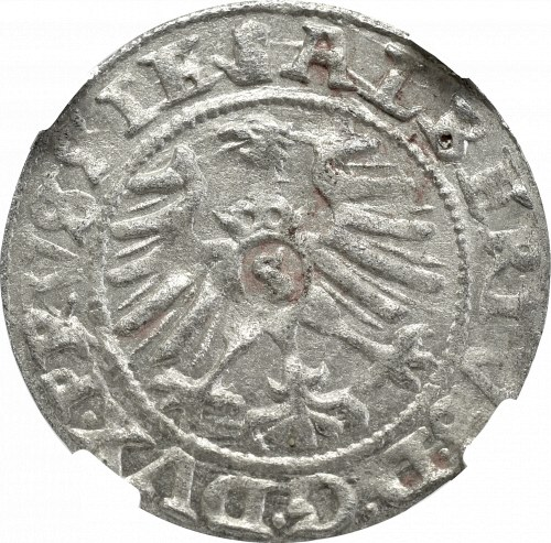 Prusy, Albert Hohenzollern, Szeląg 1559, Królewiec - NGC MS63