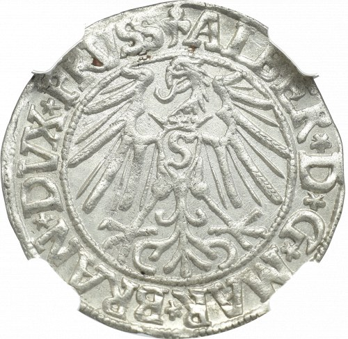 Prusy, Albert Hohenzollern , Grosz 1546, Królewiec - NGC MS62