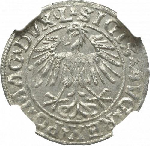 Zygmunt II August, Półgrosz 1548, Wilno - NGC MS63