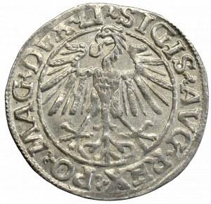 Zygmunt II August, Półgrosz 1548, Wilno