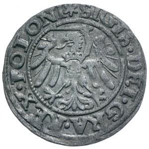 Zygmunt I Stary, szeląg 1546, Gdańsk