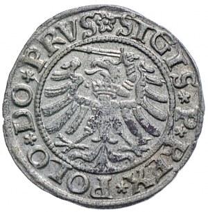 Zygmunt I Stary, szeląg 1532, Elbląg