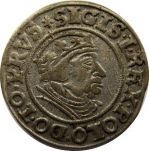 Zygmunt I Stary, 1 grosz 1539, Gdańsk
