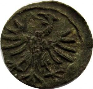 Zygmunt I Stary, denar bez daty, rozeta, Kraków