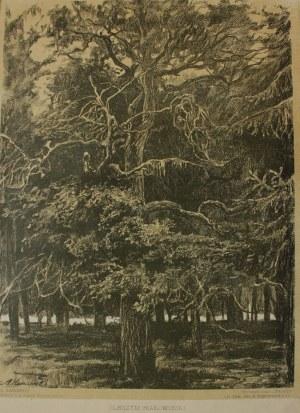 Antoni Kamieński (1860-1933), 4 szt. litografia