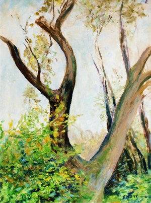 Aneri Irena Weissowa (1888-1981), Stara jabłoń - Kalwaria, ok. 1979
