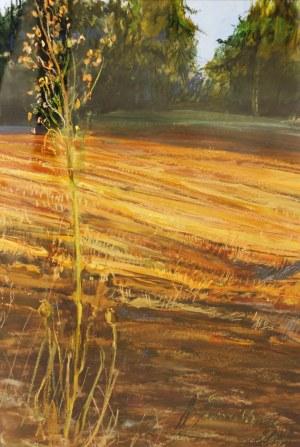 Aneta Jaźwińska, Wschód słońca, 2006