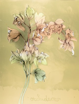 Bruno Bruni (ur. 1936 r. Gradara) Orchidea