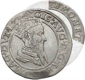 Zygmunt II August, Czworak Wilno 1568 - MONET - rzadkość