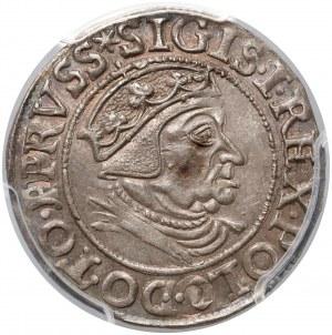 Zygmunt I Stary, Grosz Gdańsk 1538 - piękny