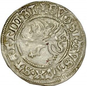 Pomorze, Bogusław X 1478-1523, Szeląg 1504, Szczecin.