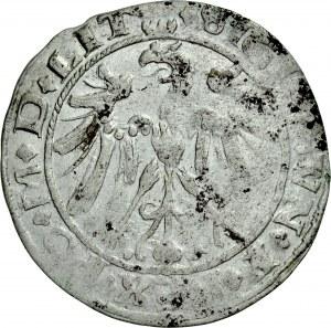 Zygmunt I Stary 1506-1548, Grosz 1536, Wilno, RRR.