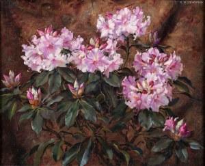 Stanisław Ejsmond, Różowy rododendron, ok. 1925