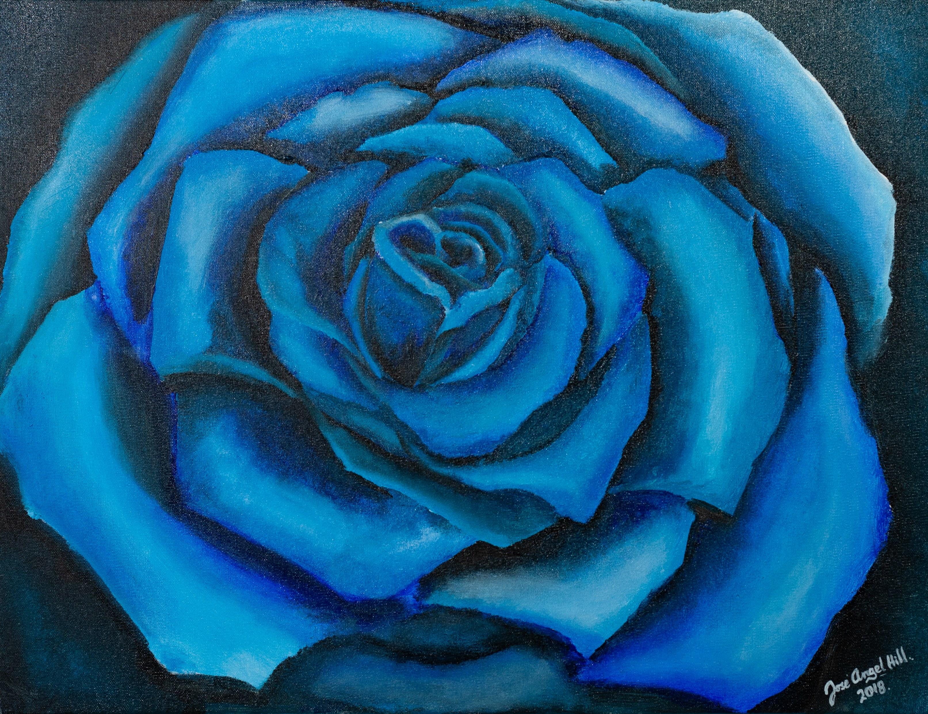 José Angel Hill, Blue rose