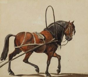 Maksymilian Oborski – przyp. (1809–1878), Koń w zaprzęgu
