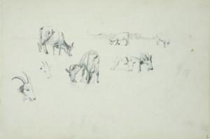 Włodzimierz Tetmajer (1861 - 1923), Szkice pasących się krowy i kozy, 1907