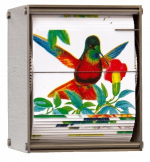 JUAN FONTANIVE Ornithology J, 2018
