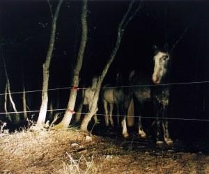 FELIX FRIEDMANN Verdun horses, 2001