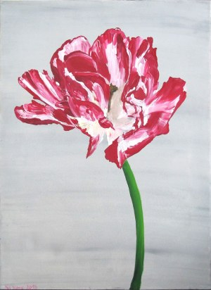No Name, 47. Tulipan postrzępiony 2, z cyklu: