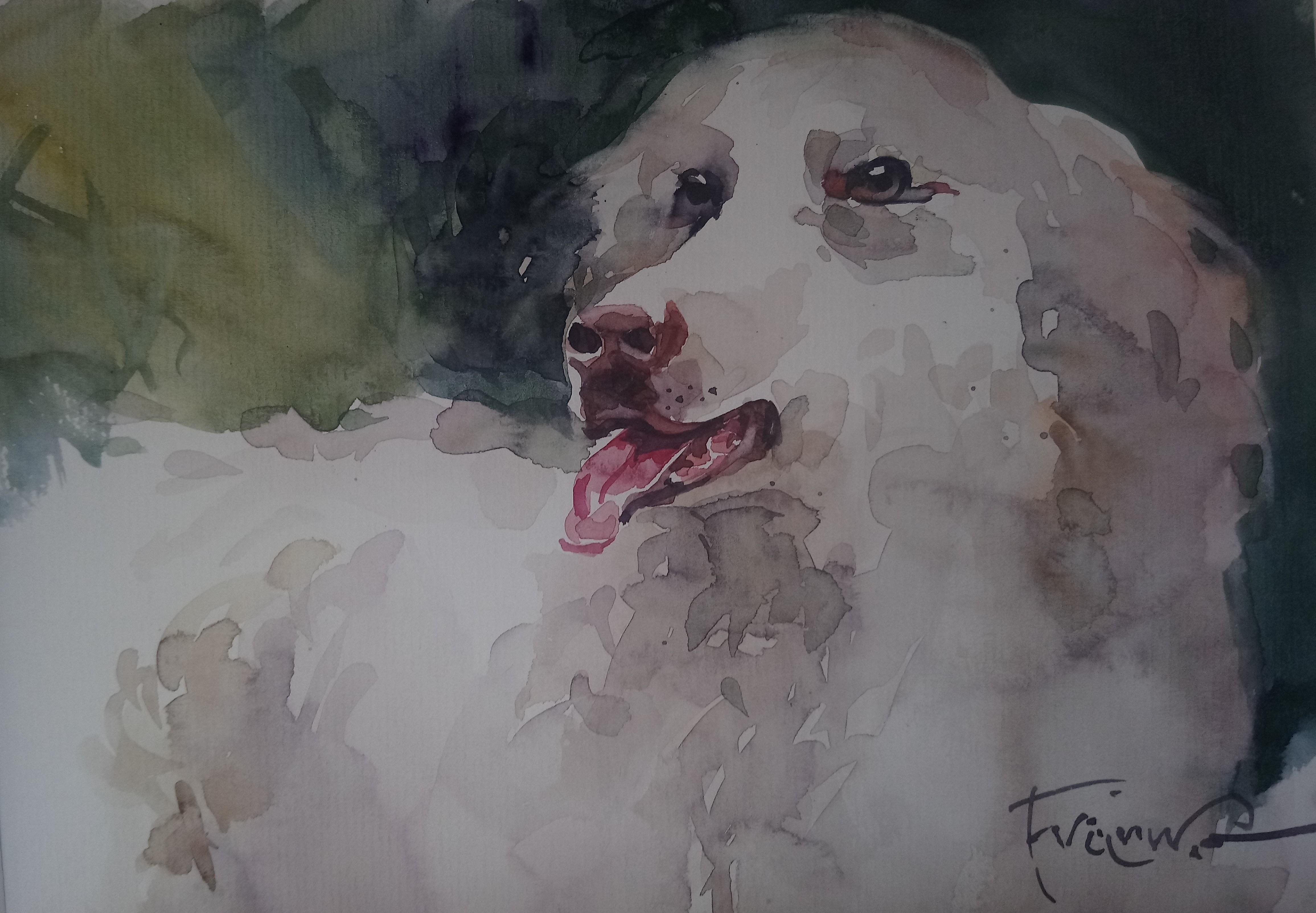 Aleksander Franko, Pies