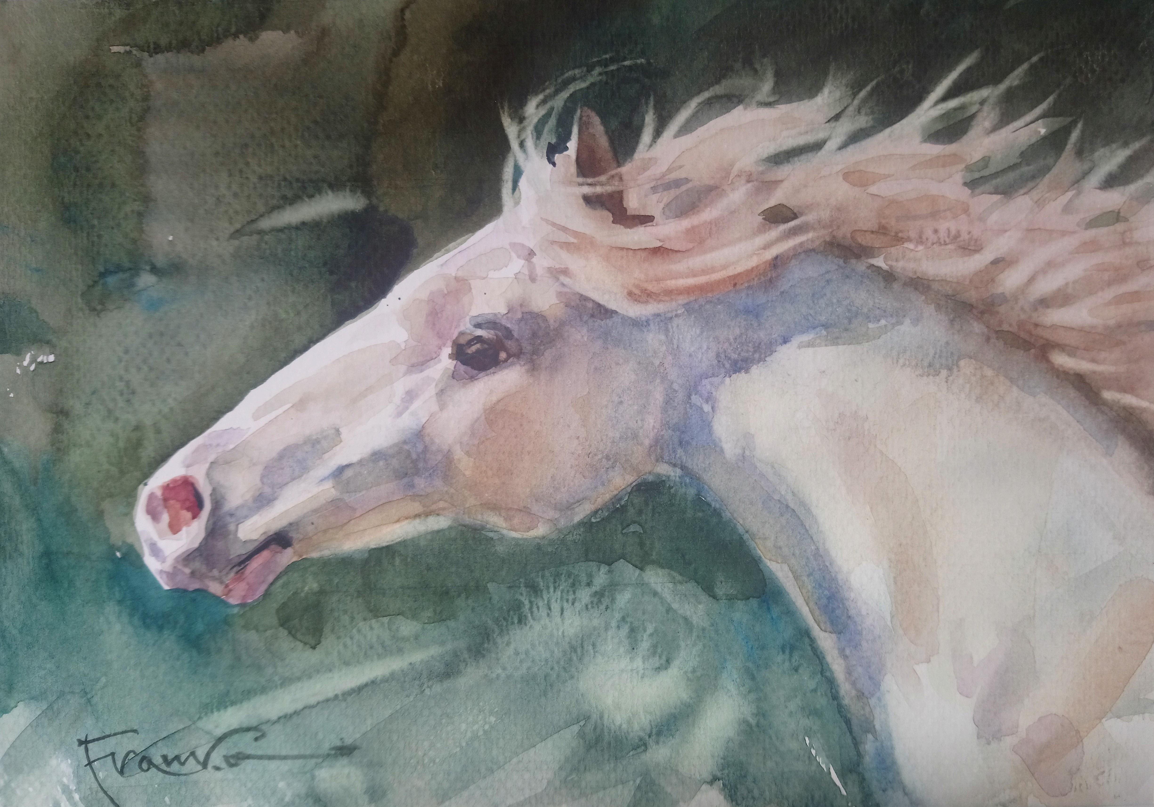 Aleksander Franko, Koń