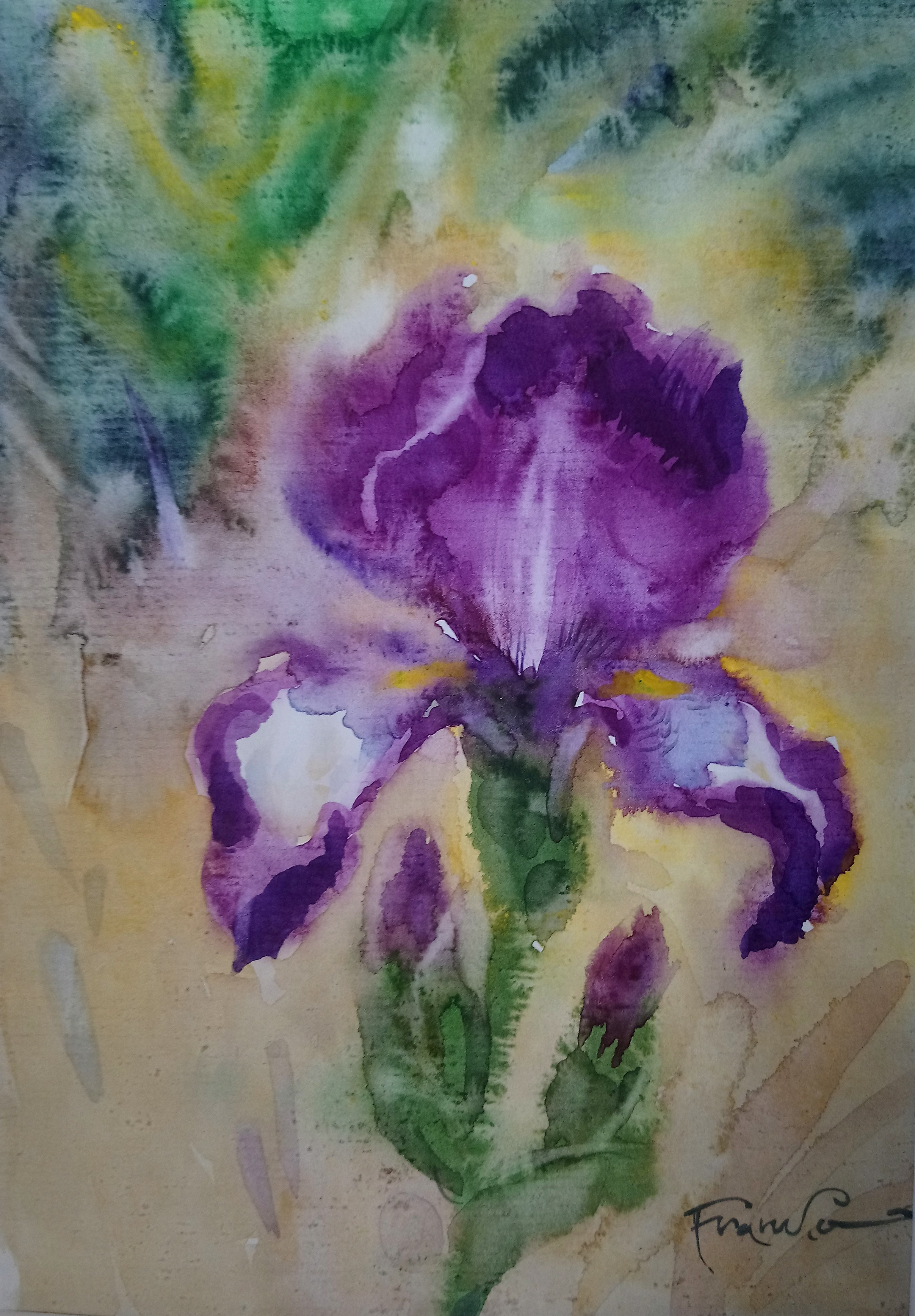 Alesander Franko, Kwiat