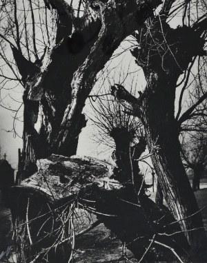 Hartwig EDWARD (1909-2003), Rodzima sprawa, 1985