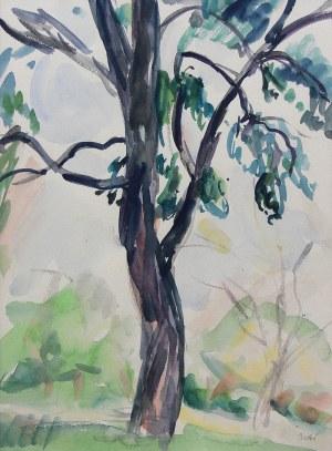 Wojciech Weiss (1875 Leorda na Bukowinie - 1950 Kraków), Studium drzewa