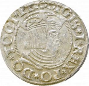 Zygmunt I Stary, Grosz 1533, Gdańsk - PCGS AU55